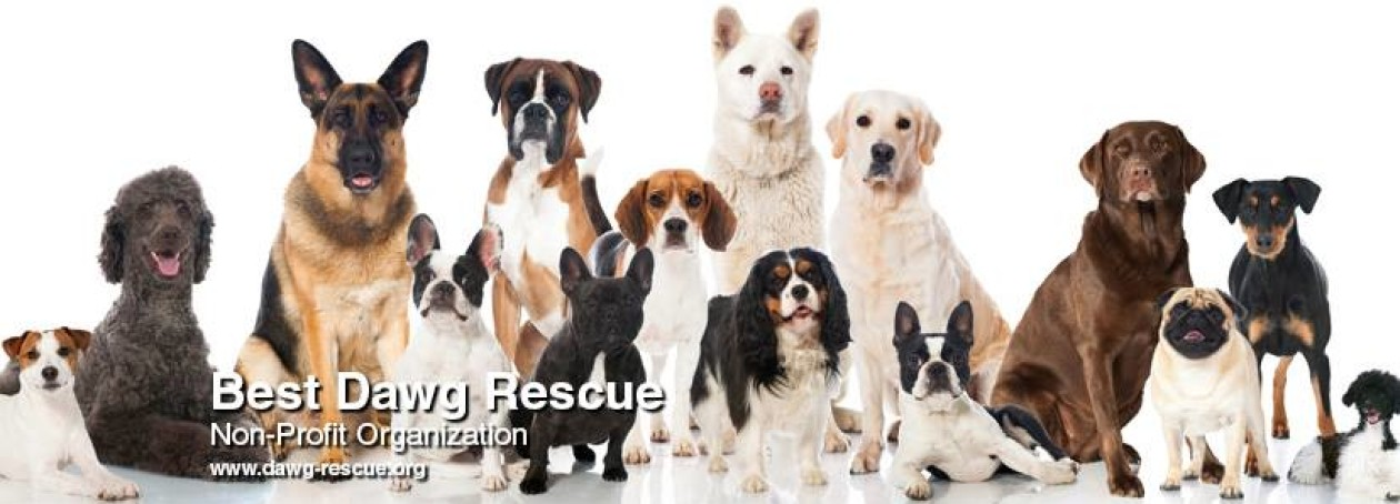 Best Dawg Rescue, Inc.
