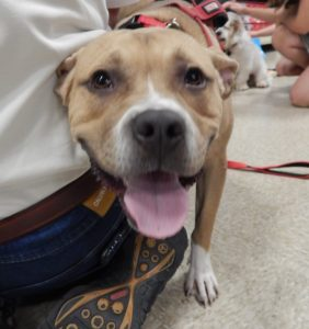 Adoptable Dogs | Best Dawg Rescue, Inc